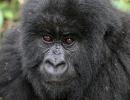 Gorillatrekking in Virunga 5