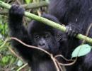 Gorillatrekking in Virunga 2
