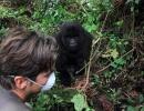 Gorillatrekking in Virunga 4