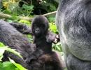 Gorillatrekking in Virunga 8