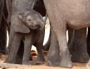 Elefantenspielplatz - Chobe Nationalpark