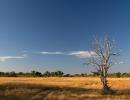 Landschaft in Khwai - Moremi (Okavangodelta)