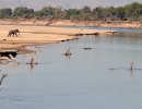 Luangwa River - South Luangwa