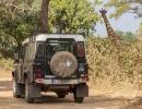 Giraffe - South Luangwa