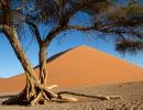 Düne 45 - Namib Naukluft NP