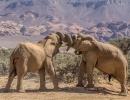 Wüstenelefanten im Huab River - Twyfelfontein