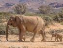 Wüstenelefanten - Twyfelfontein
