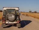 Wildhunde auf der Transitstrecke durch die Nxai Pan - Botswana