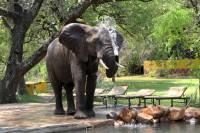 Elephant Maramba Livingstone