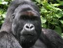 Gorillatrekking in Virunga 7