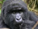 Gorillatrekking in Virunga 3