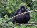 Gorillatrekking in Virunga 6