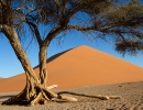 Dune 45 - Namib Naukluft NP
