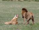 Central Kalahari Game Reserve - Botswana