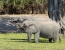 Elefanten - South Luangwa