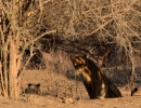 Wer beobachtet wen? - Mana Pools Nationalpark, Simbabwe
